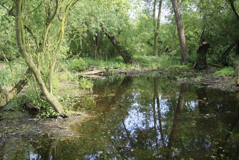 Pond in reserve